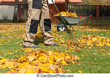 Gardening in autumn - Man during autumn cleaning works on ...