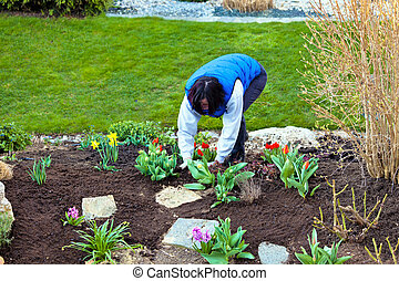 gardening in spring - a woman working in the garden in...