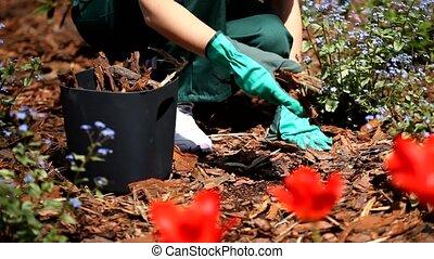 Gardening in the summer video