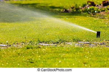Gardening. Lawn sprinkler spraying water over grass. - ...