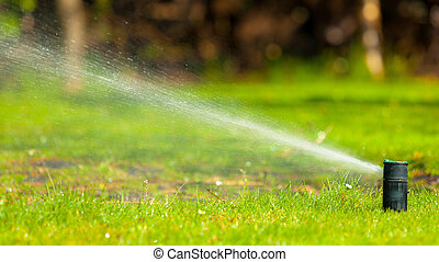 Gardening. Lawn sprinkler spraying water over grass. -...