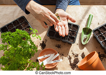 gardening, planting at home. man sowing seeds in germination...