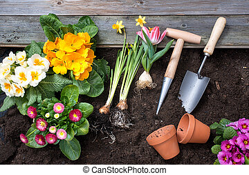 Gardening - Planting flowers in pot with dirt or soil at ...
