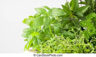 green herbs, spices and flowers - gardening, plants and...