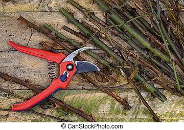 Gardening - Pruning Roses with Secateurs - Gardening -...