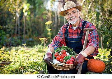 Gardening - Senior gardener with a basket of harvested...