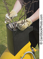 Gardening- shredding - Hands worker who pushed the branch to...