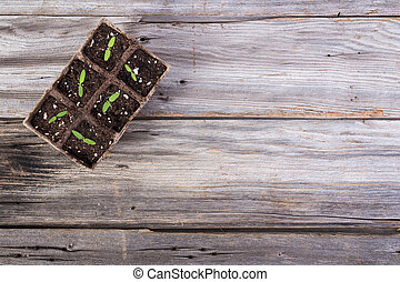 gardening square organic planting pots with tomato plant sprout