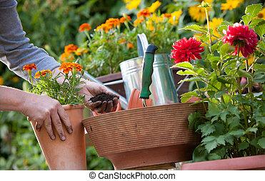 Gardening - Gardeners hand planting flowers in pot with dirt...