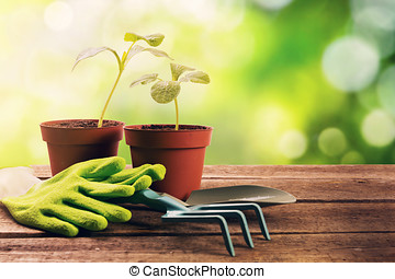 gardening tools and plants on old wooden table in garden