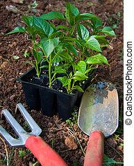 Gardening Tools - Gardening tools next to green pepper ...