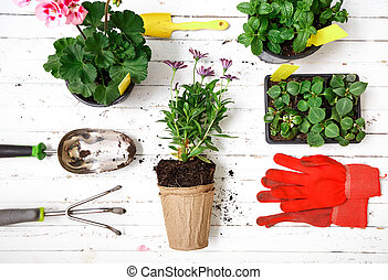 Gardening tools, gloves and flowers in pot for planting at backyard, garden maintenance and hobby concept