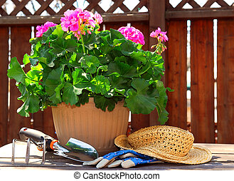 Pot of geraniums flowers with gardening tools