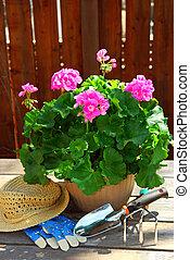 Gardening tools - Pot of geraniums flowers with gardening...