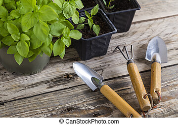 Gardening tools with plants in pots