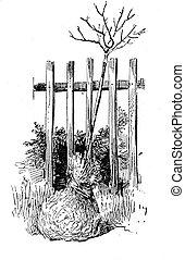 Gardening vintage illustration, tree  ready to plant