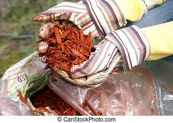 Gardening with Red Mulch - A gardener grabs a hand full of...