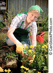 gardening - woman cutting the flower in the garden