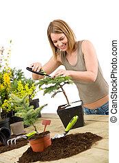 Gardening - woman trimming bonsai tree with pruning shears