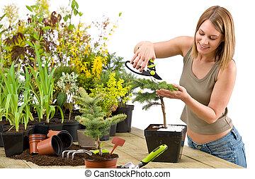 Gardening - woman trimming bonsai tree with prunning shears...