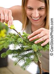 Gardening - woman trimming spruce tree, focus on scissors...