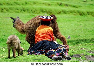 gardien, lama