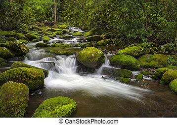 garfo, montanhas, grande, rugindo, parque, esfumaçado, luxuriante, gatlinburg, tn, floresta verde, nacional, rio, fotografia, paisagem