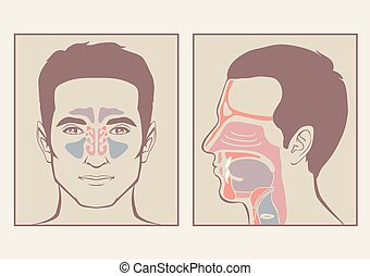 garganta, anatomia, nariz