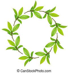 Garland of Bay Leaves - Bay leaf abstract circular garland...