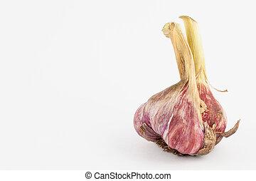 Garlic (Allium sativum) isolated in white background
