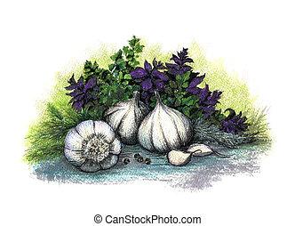 Garlic and herb. Hand drawn watercolor illustration