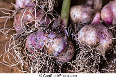 Garlic bulbs and cloves on wooden background