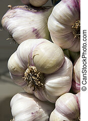 Garlic bulbs - Close up of fresh bulbs of garlic for sale at...