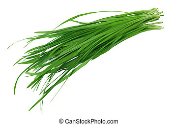 Garlic Chives - Bundle of garlic chives isolated on white...