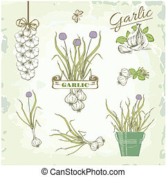 Garlic vegetables, herb, plant, cusine vintage background,...