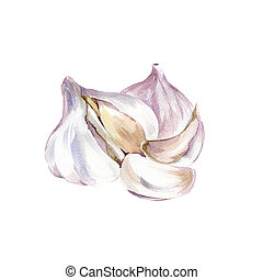 Garlic - Watercolor Garlic. Hand Drawn Illustration Organic...