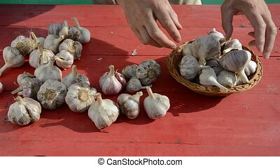 garlic harvest on red table