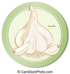 Garlic Herb Icon - Garlic bulb and cloves icon, popular herb...