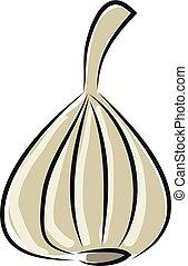 Garlic illustration