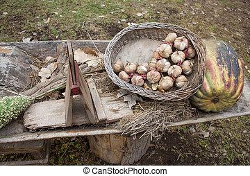 Garlic in the basket, pumpkin, plant