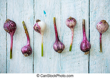 Garlic is laid out in a row