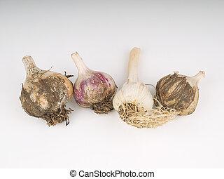 garlic on a light background