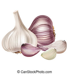 Garlic on white background - Garlic isolated realistic...