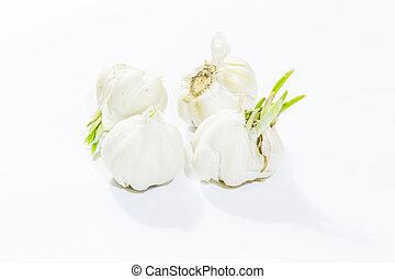 Garlic on white background