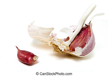 garlic - part used Garlic Bulb from low perspective isolated...