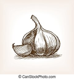 Garlic sketch style vector illustration. Old hand drawn...