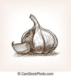 Garlic sketch style vector illustration. Old hand drawn...
