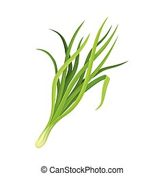 Garlic Twig as Kitchen Herb for Cooking Vector Element