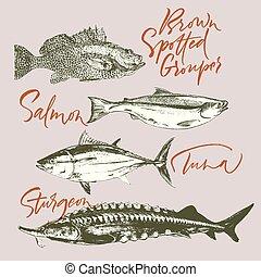 garoupa, peixe, delicates, salmão, atum, esturjão