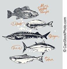 garoupa, peixe, salmão, atum, dorado, esturjão